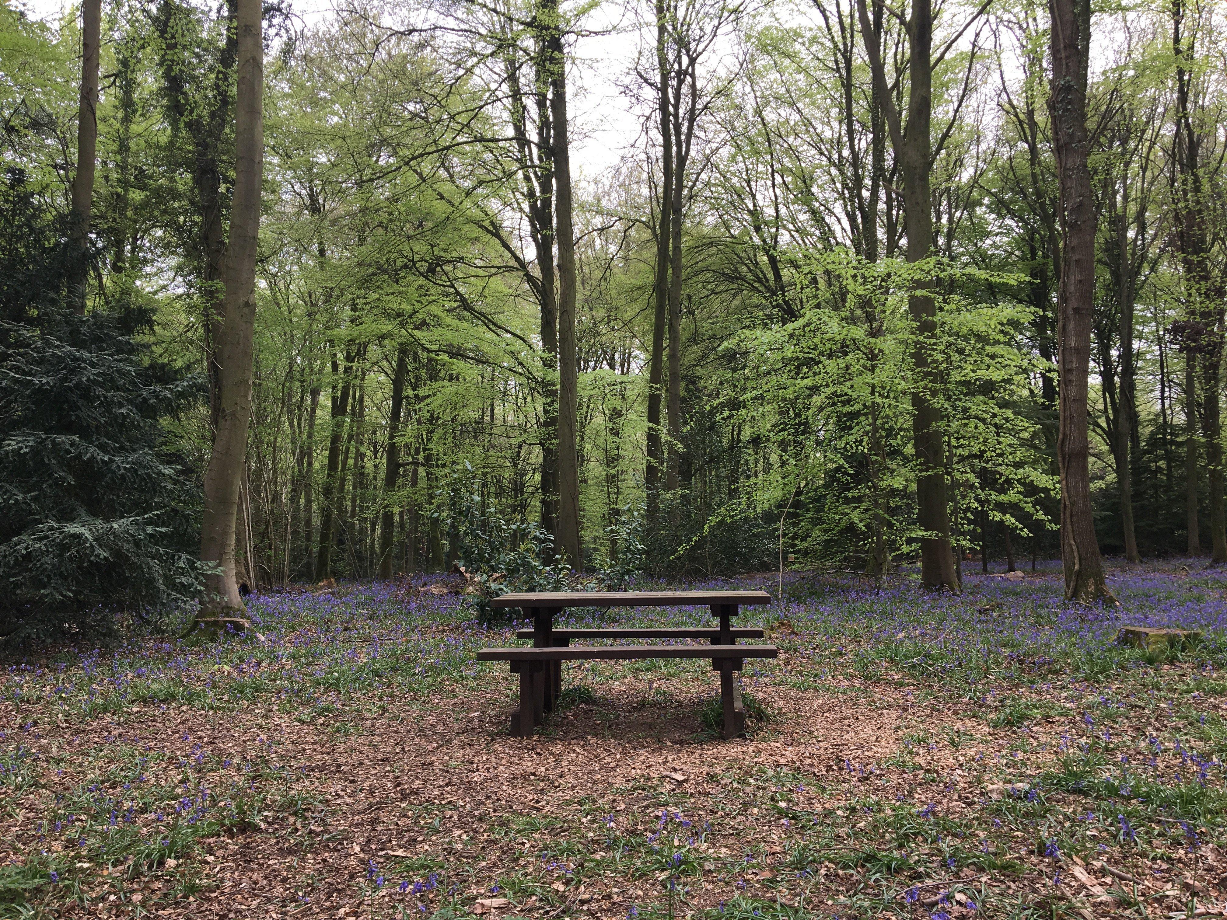 picnic bench in Barnetts wood